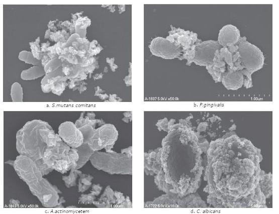 Adsorbtion schädlicher Bakterien